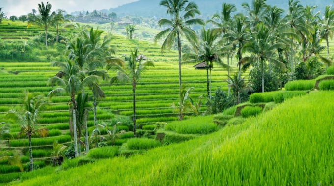 说起巴厘岛的梯田,可能大家想到的是德格拉朗梯田.