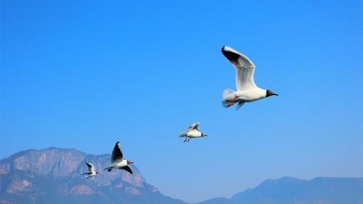 纳帕海自然保护区是国家一级保护动物珍稀飞禽黑颈鹤