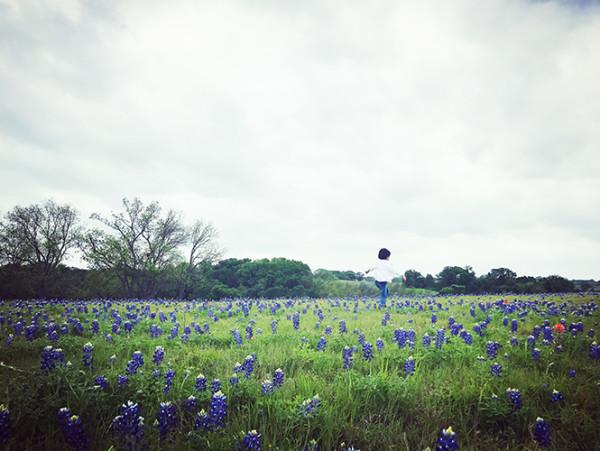 去德克萨斯寻找矢车菊蓝