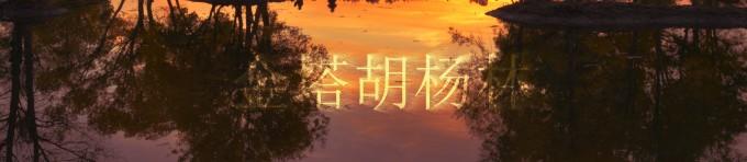 金塔胡杨林