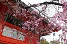 一日游团去京都