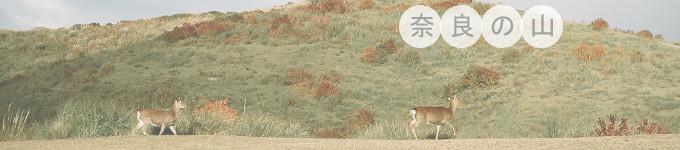 Day5-去奈良喂小鹿